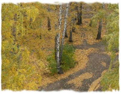 Осенины осень листья жёлтые