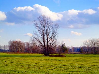 ***Одиночка поле дерево весна трава лес