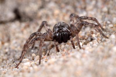 Добрый паучок паук
