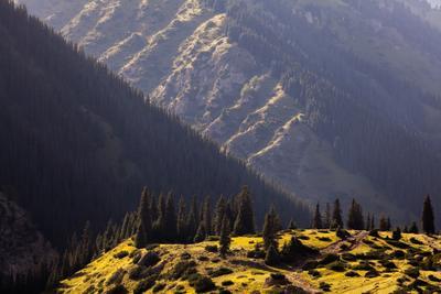 Киргизия №1 Киргизия пейзаж ущелье алтын арашан закат деревья