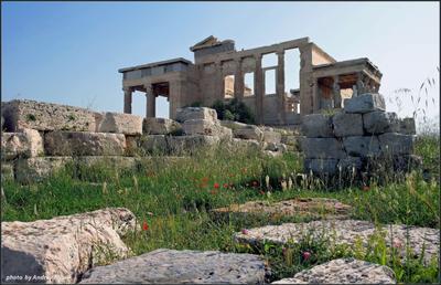 Теперь здесь растут цветы... Греция Афины Акрополь цветы трава весна камни храм Эрехтейон