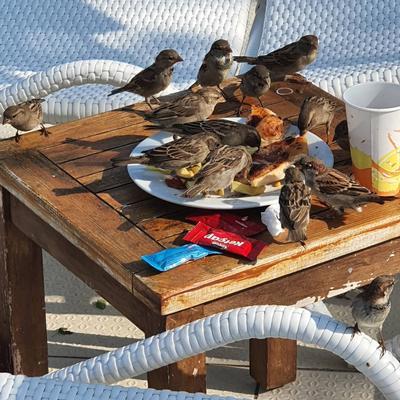 Турция. Все включено! Халява птички лето курорт Турция