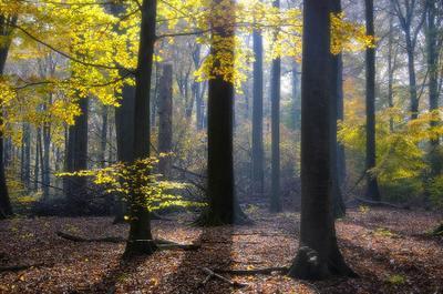 Про свет и листья утро лес осень бранденбург