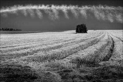 Гребенка для поля... поле