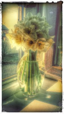 свежесрезанные ароматные первоцветы с огорода нарциссы