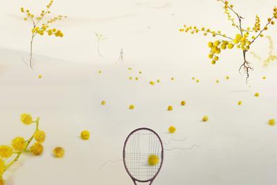 Мимо мимоза теннис игра поле корт ракетка