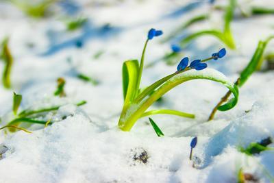 Такая вот весна