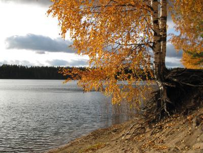 Золотая осень озеро выборг золотая осень