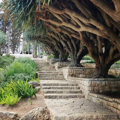 Аллея драконовых деревьев