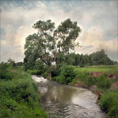 Было лето.. Пейзаж лето речка дерево