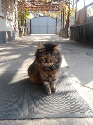 Размышления кота Муры осень кошки дома
