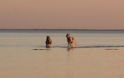 ...отпустили погулять собаки Цуцык КотоПёс море штиль закат вода радость счастье