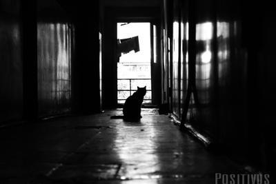 Кот по кличке наум