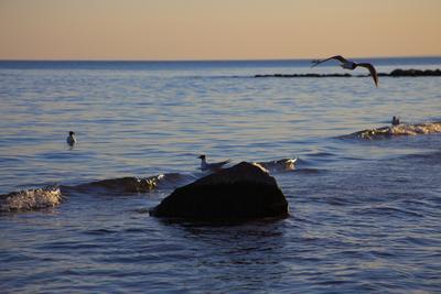 Вечер в Репино вечер море чайки