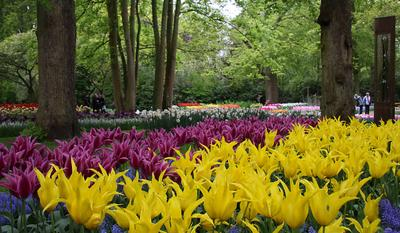 голландский цветочный ковер 2 природа
