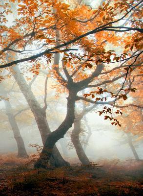 ***Осенний танец Осень грабы туман