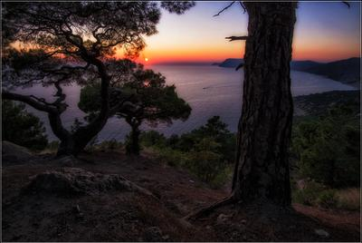 На закате Крым Балаклава Инжир вечер