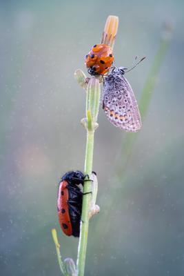 Пробуждение Макро утро роса боке бабочка божья коровка рассвет пробуждение новый день