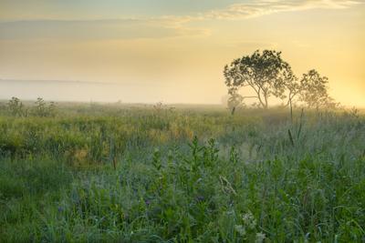 С утра... Утро лето поле туман июль солнечный свет трава растения лес дерево природа пейзаж