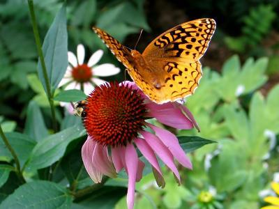 с бабочкой и пчелой бабочка пчела цветок