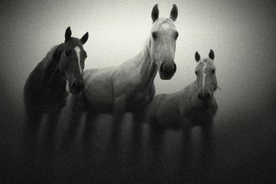 Сон лошади, тройка