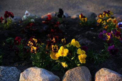 Заботливо посаженные цветочки