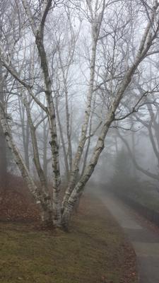 2 туман лес утро