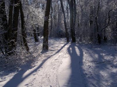 Зимнее утро зима утро солнце