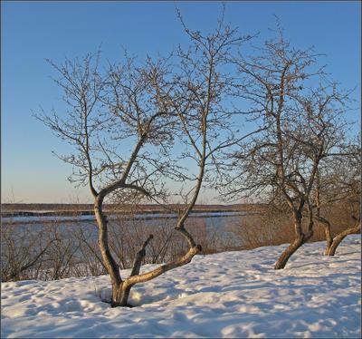 Март снежный март Волга яблони