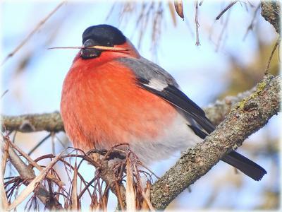 *** природа фауна животные птицы