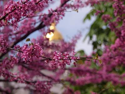 *** киев церковь цветы цветущее дерево купол