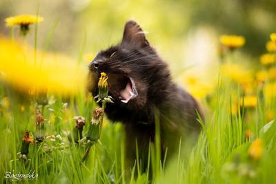 сорнякам - бой кошки