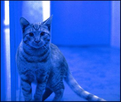 Синий кот синий кот