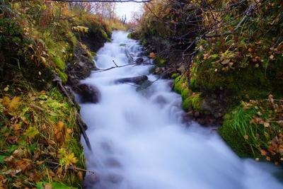 Летит ручей, спешит ручей ... осень вода ручей овраг