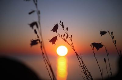 *** закат цветы колокольчики ладожское озеро карелия
