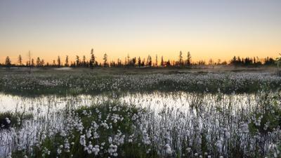 Весенний закат белых ночей природа тундра весна закат речка россия НовыйУренгой