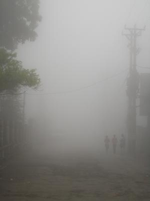 Ёжики в тумане. (Сапа. Сев. Вьетнам)