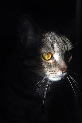 Соня кошка кот взгляд глаза тень свет темнота полумрак чб