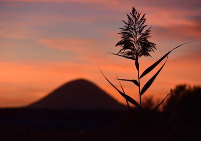 Небо краснеет. Тихо шепчет о Вечном тростник под горой. хокку тростник гора Новотерский