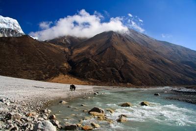 Одинокий як Langtnang, Nepal, yak