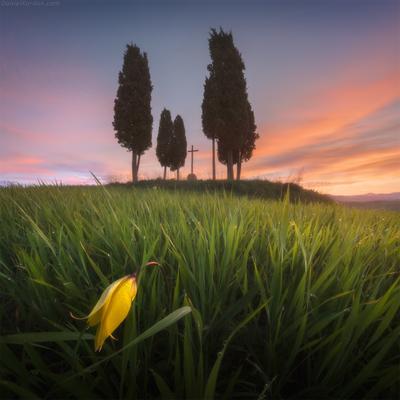 *** запах росы *** Тоскана