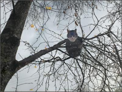 Осенние сны Осень кот дерево листья