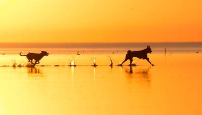 *** собаки Цуцык КотоПёс море штиль закат вода