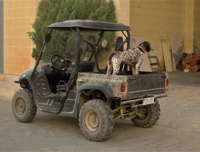 В ожидании хозяина Машина собака гараж