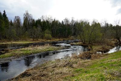 Зелень весны река половодье пейзаж природа пасмурно весна