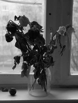 Я принес тебе букет - ты засушила и скурила цветы. БГ.