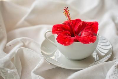 *** цветок гибискус утро чашка красный белый CatSteel