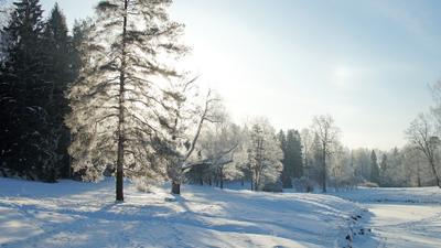 Солнечный удар Павловский парк зима речка лес