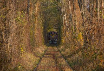 В тоннеле Клевань золотая осень краски осени поезд тоннель любви