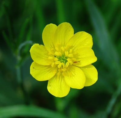 Желтый цветок жёлтые желтый цветок цветы растение yellow flower plant
